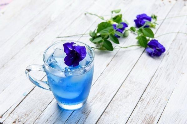 Hoa đậu biếc tươi, công dụng của hoa đậu biếc tươi