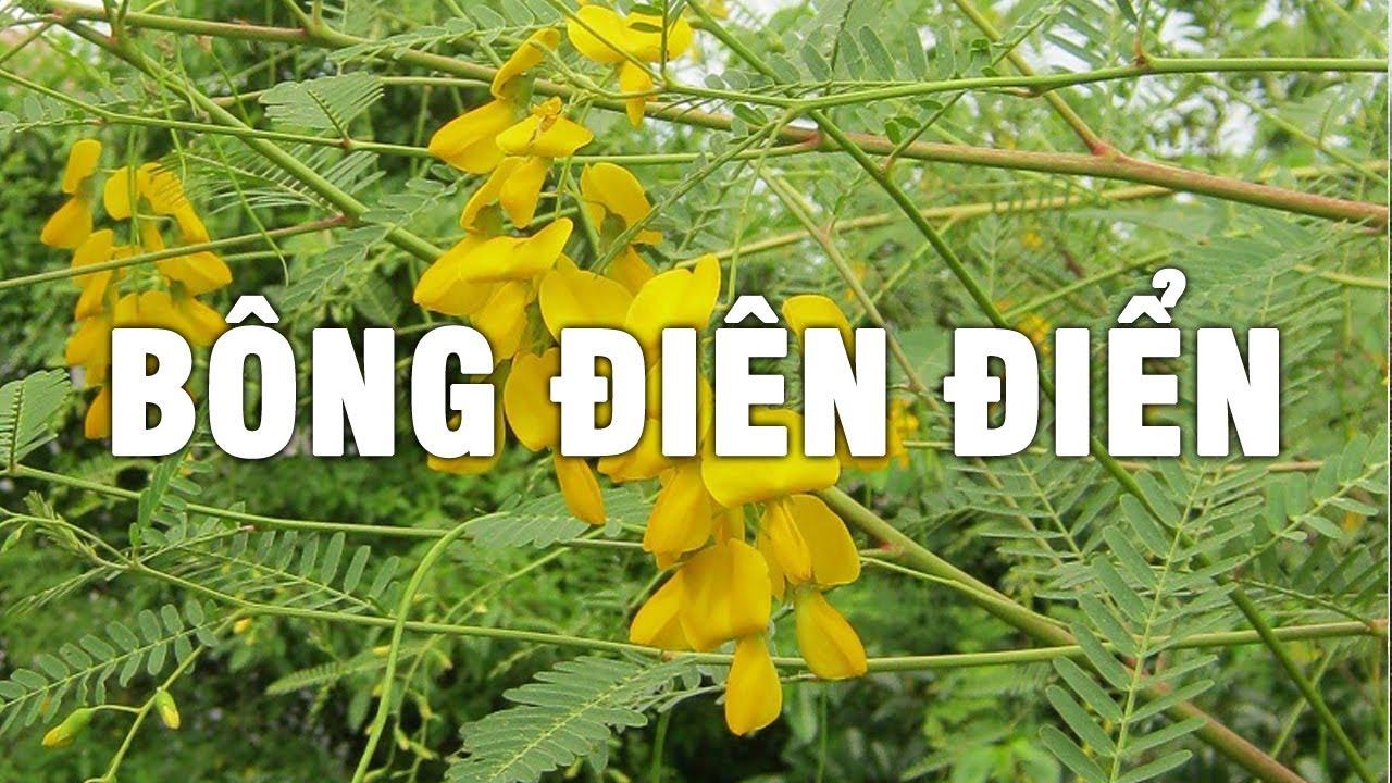 ban hat dien dien thai lan